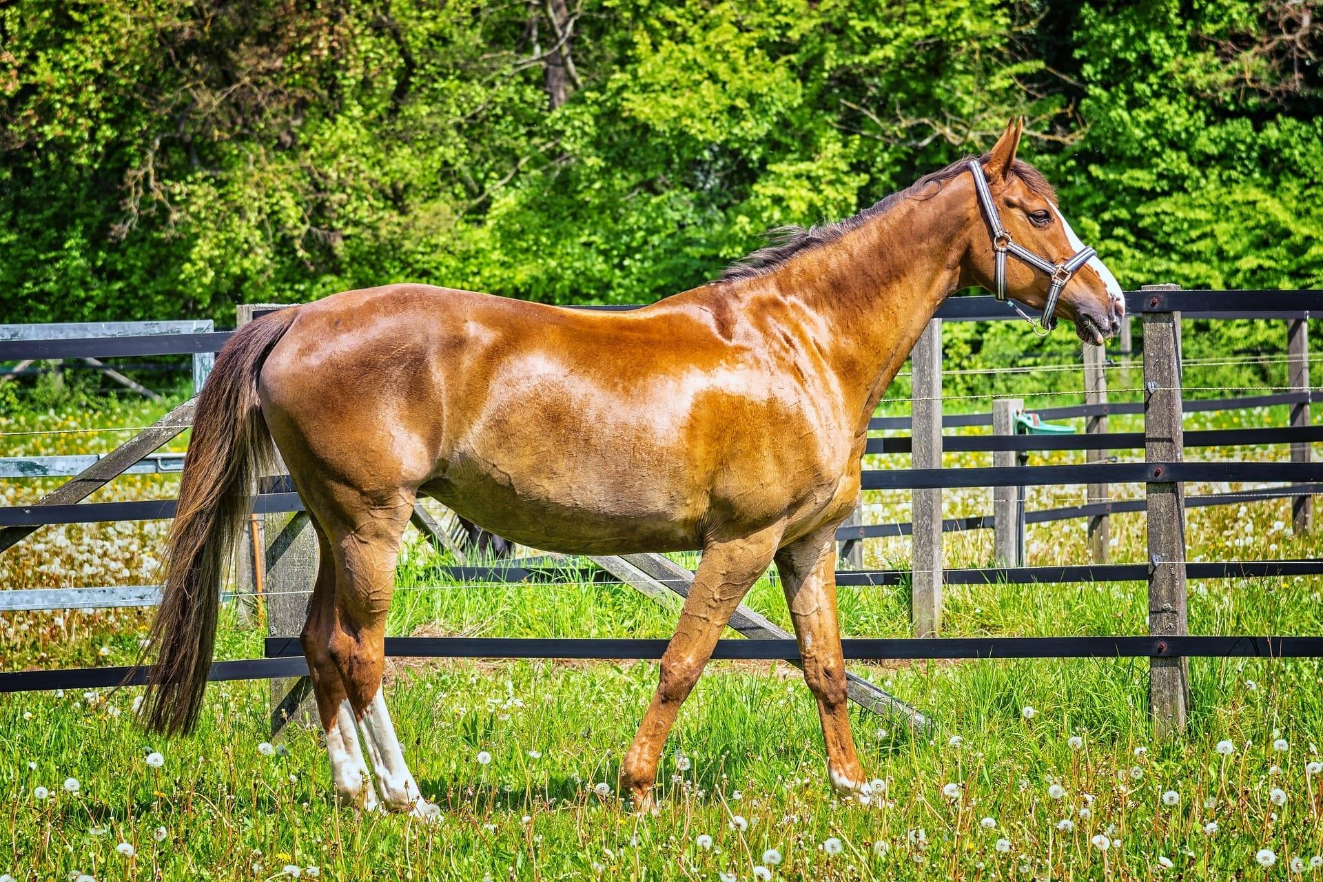 brown horse at a farm